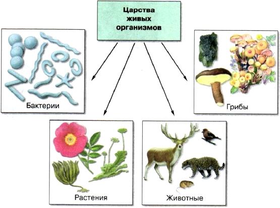 Живой организм и природа схема