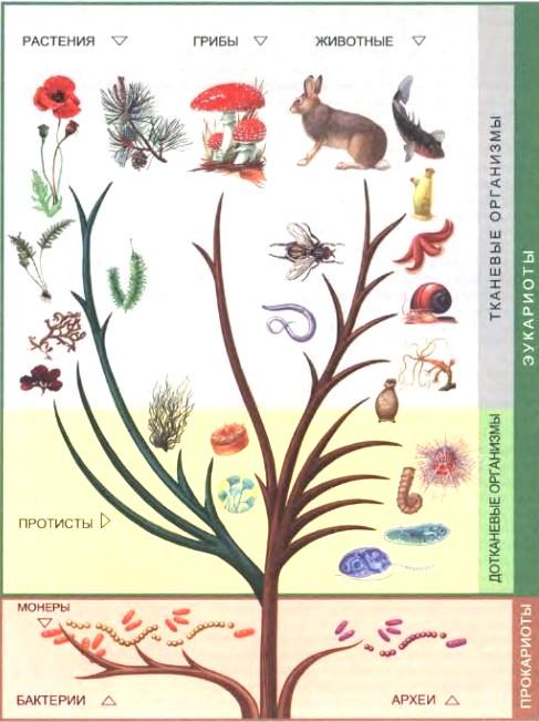 Эвглена зеленая и признаки одноклеточных растений